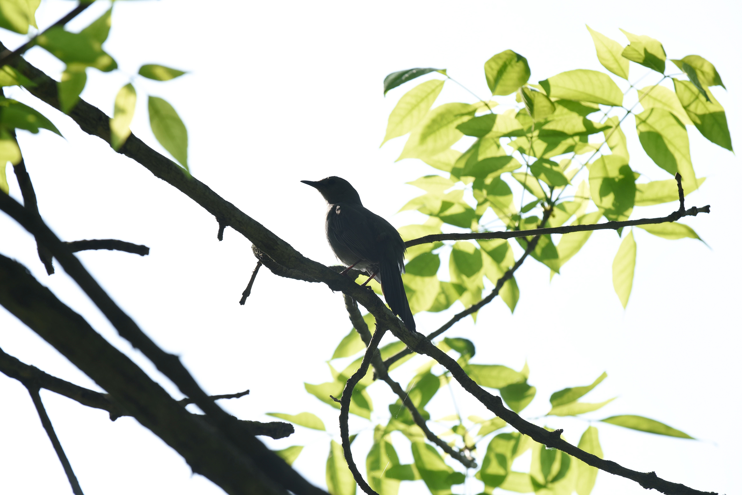 A silhouette of a bird in a tree.